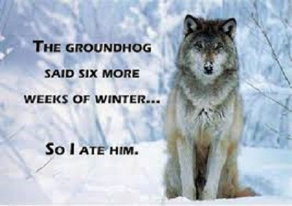 Image result for wisconsin groundhog meme